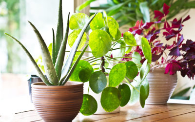 How Houseplants Actually Make Us Happier